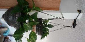 12 Renter Friendly Hook Hacks Skyway Mom Hanging Plants Hanging Plants Diy Hanging Plants Indoor