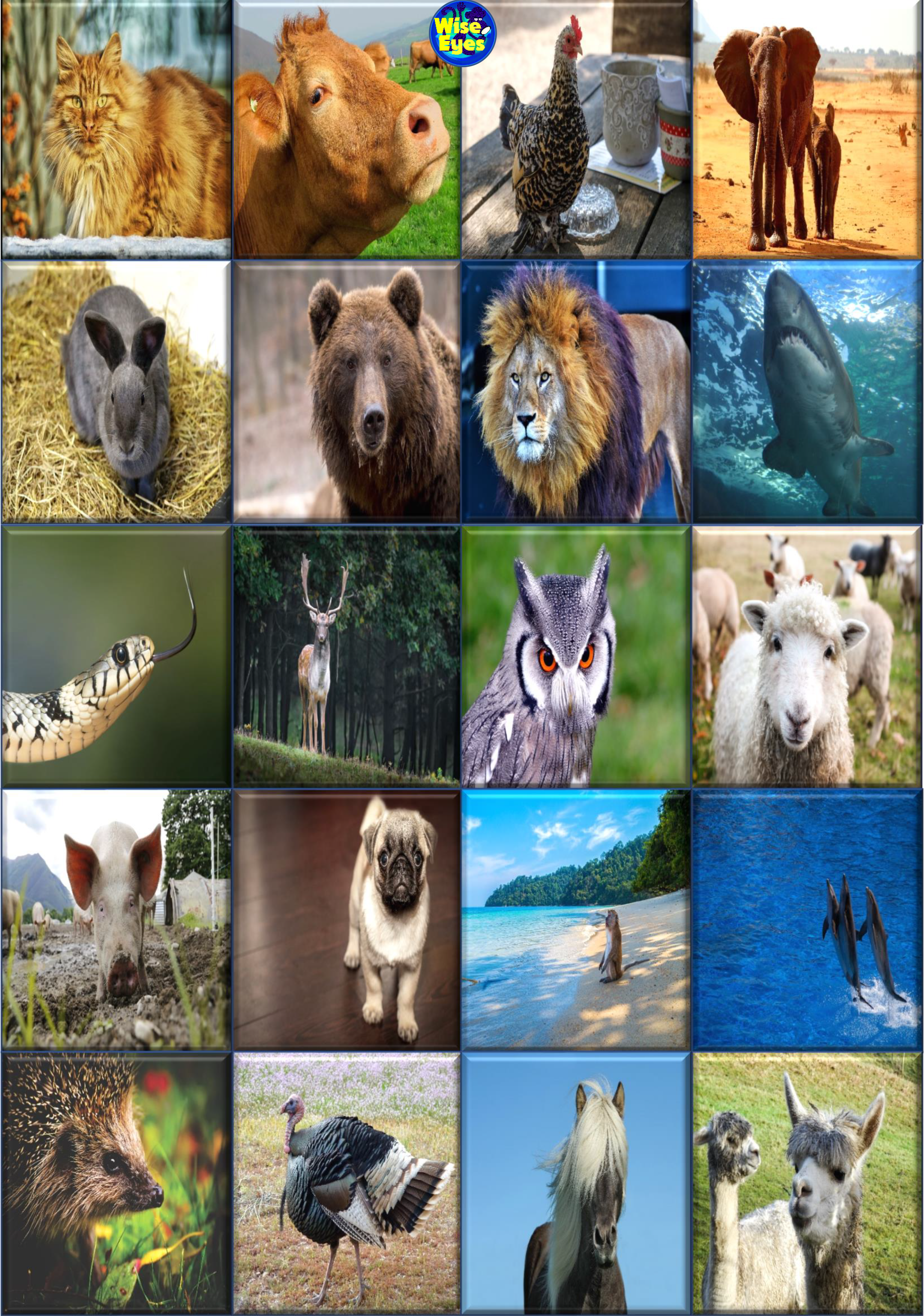 Picture Reveal Game ~ Animals ~ PPT | Wise Eyes - Fun English