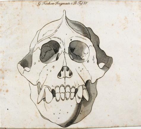 1801 - Gotthelf Fischer's ... Naturhistorische Fragmente. 1. Bd. mit Kupfern