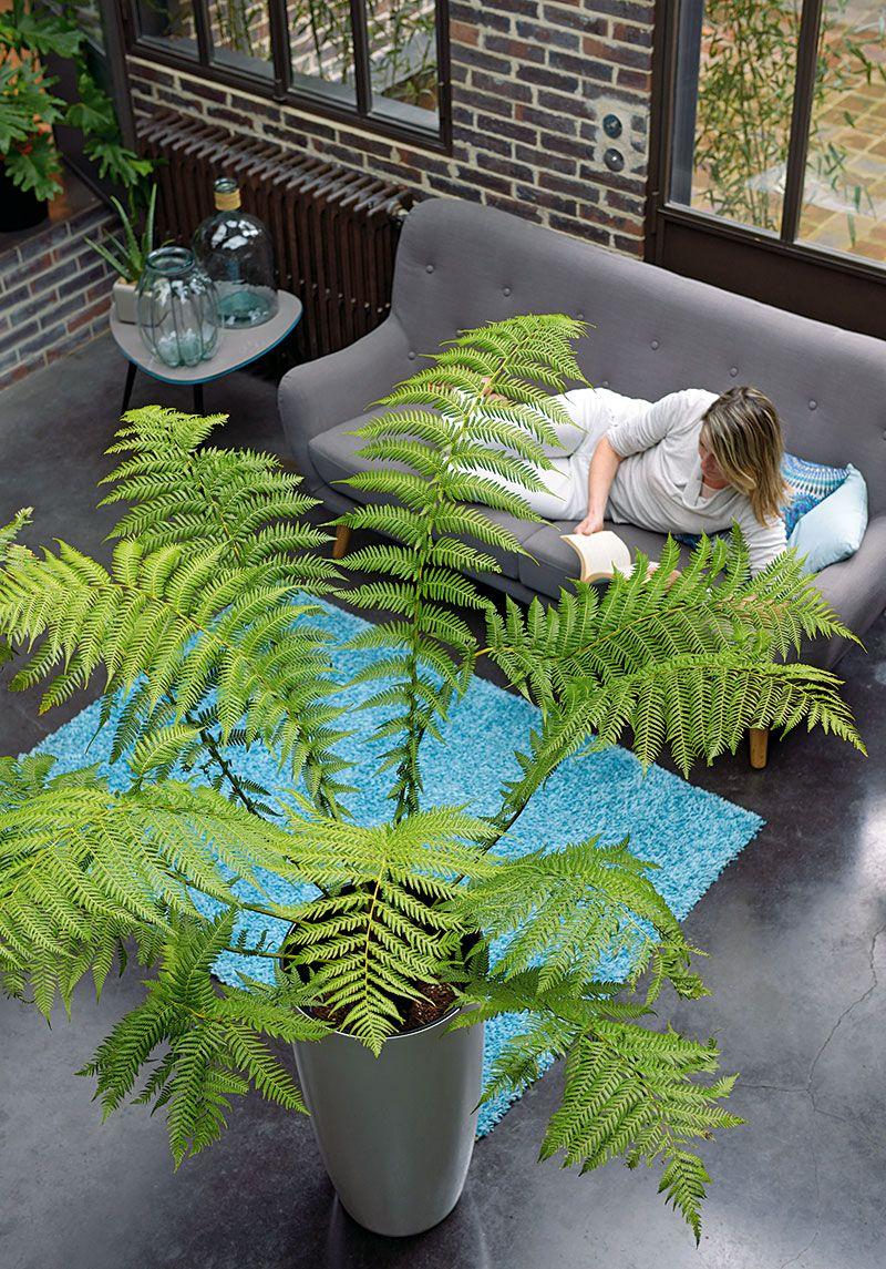 quand les plantes prennent de la hauteur truffaut plantes d 39 int rieur pinterest interieur. Black Bedroom Furniture Sets. Home Design Ideas