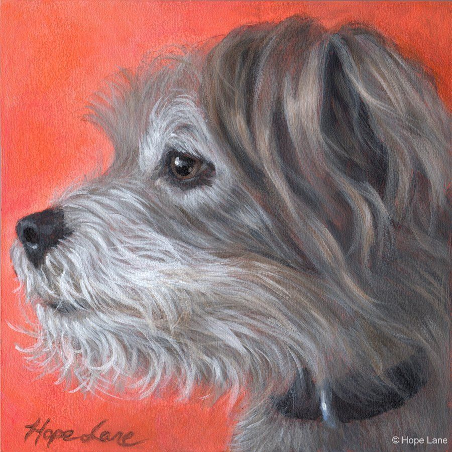Buddy, custom pet portrait of a Terrier mixed breed by