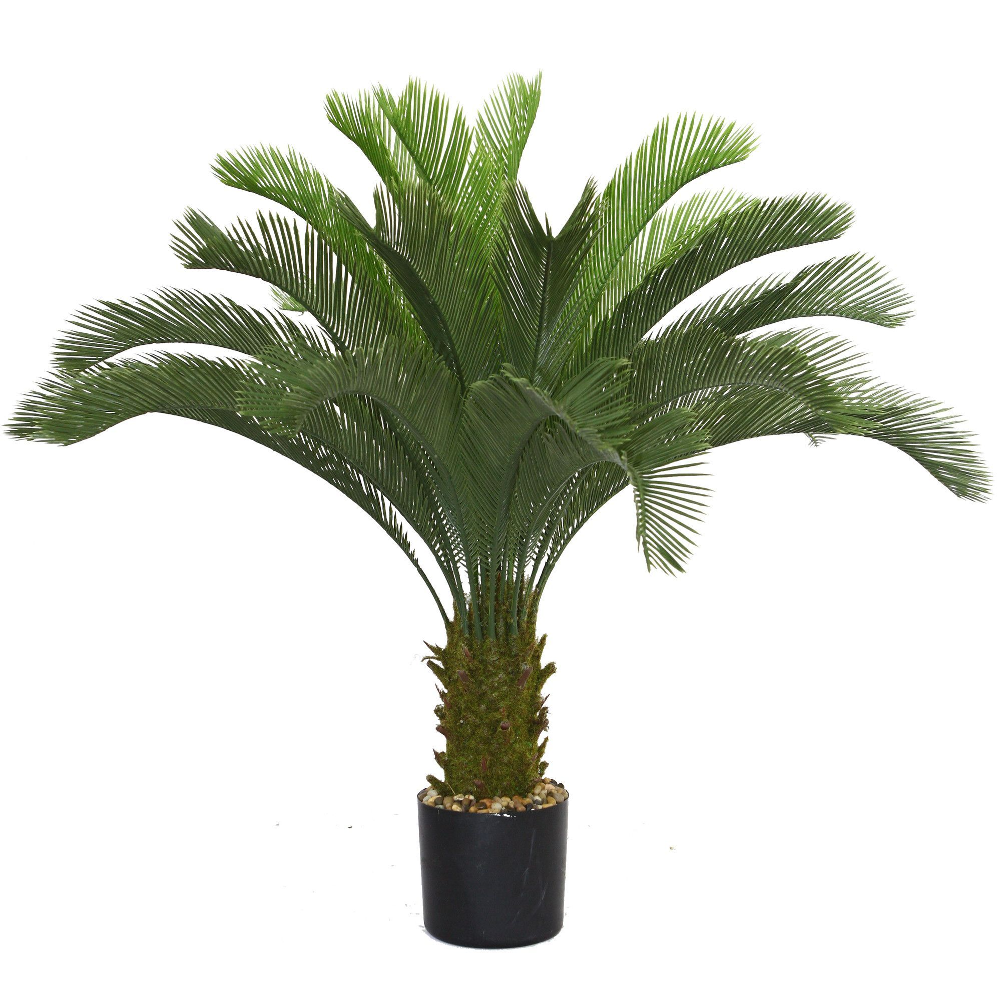 cycas palm tree in pot photoshop pinterest. Black Bedroom Furniture Sets. Home Design Ideas