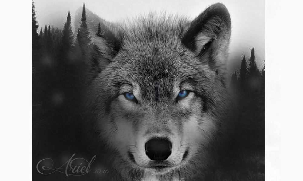 Lobo , bosque.