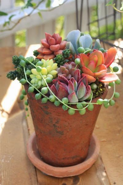 So Simple And Beautiful Succulents Many Varieties And Colors