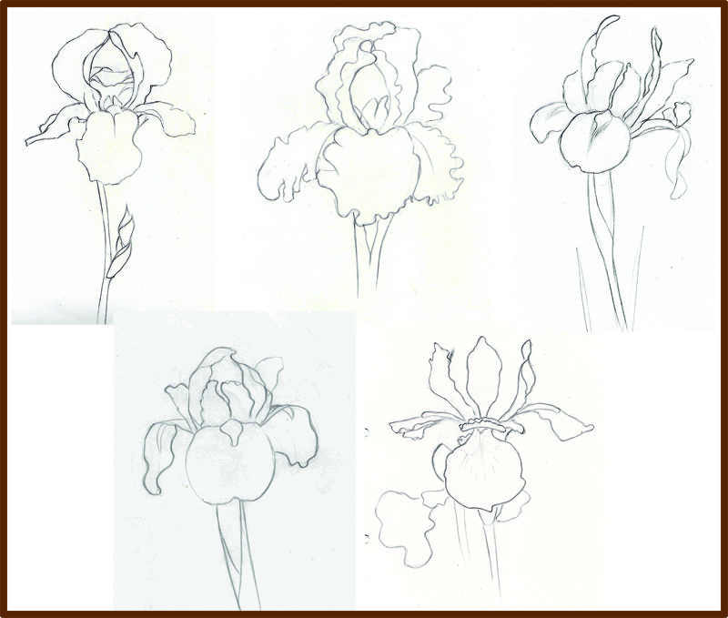 Gallery For Iris Flower Outline Iris Drawing Iris Art Flower Drawing