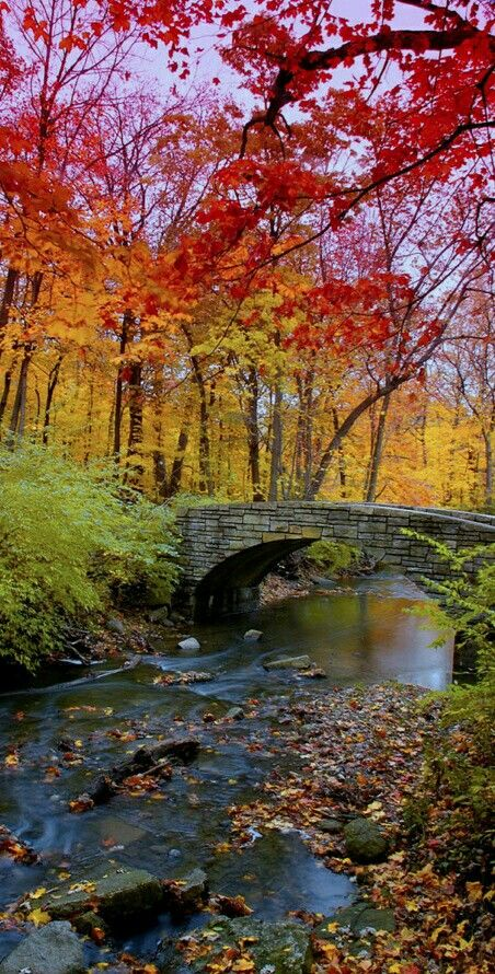 #nehir #dere #ırmak #köprü #orman #autumnscenery