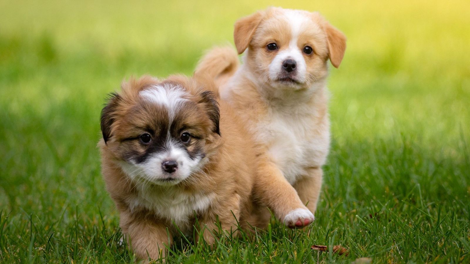 Cute Puppies Wallpaper For Mobile Phone Tablet Desktop Computer And Other Devices Hd And 4k Wallpapers In 2020 Cute Puppy Wallpaper Puppy Wallpaper Cute Puppies
