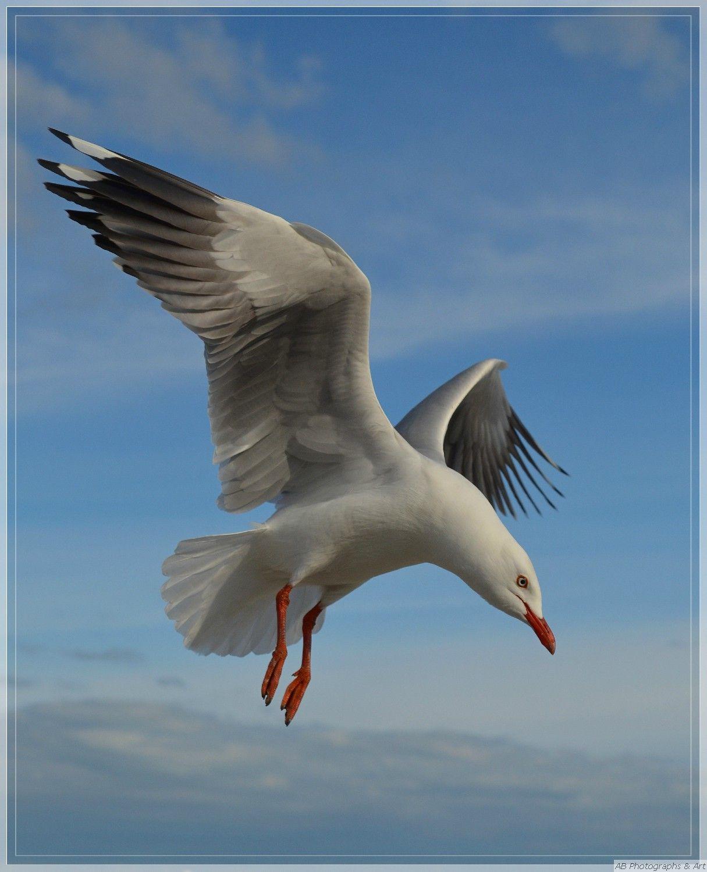 You Ll Be Flying Author Baldock Ann Seagull Tattoo Birds Painting Sea Birds