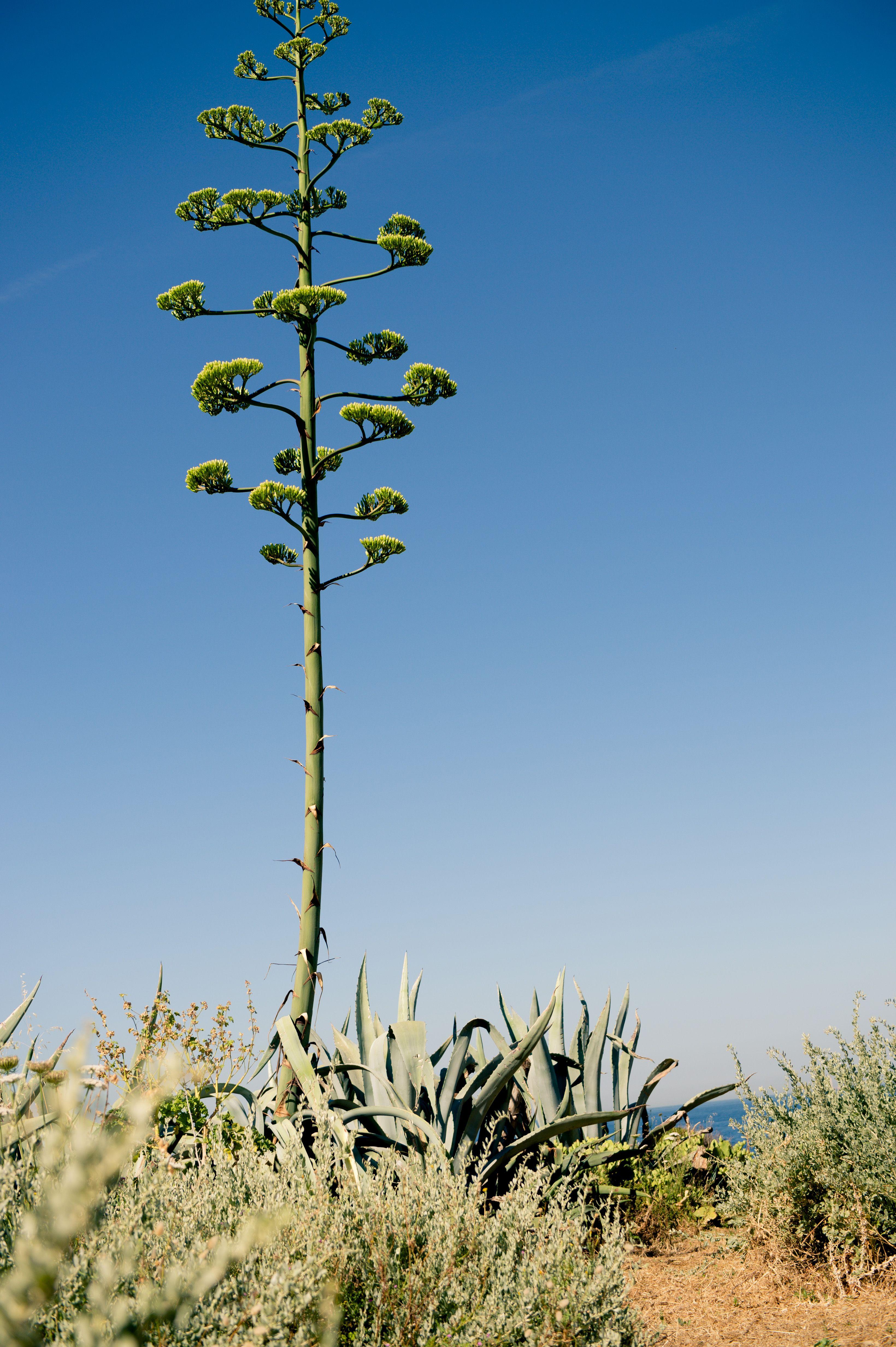 cartus plante grasse marseille calanque maison d h´tes