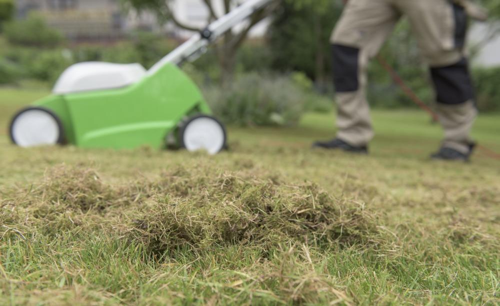 Die Optimale Rasenpflege Vom Fruhjahr Bis Zum Herbst Richtig Vertikutieren Vertikutieren Rasen