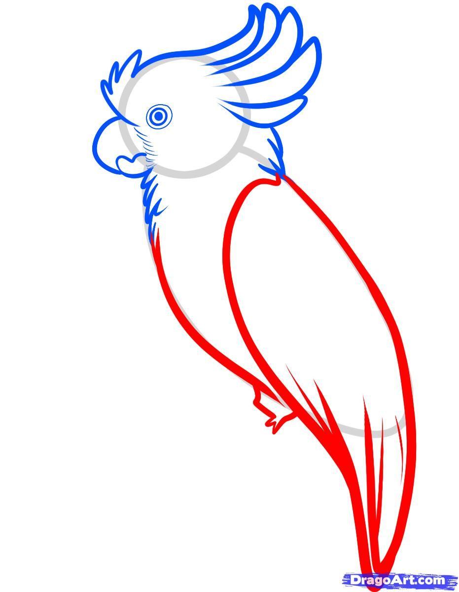 Попугай рисунки поэтапно