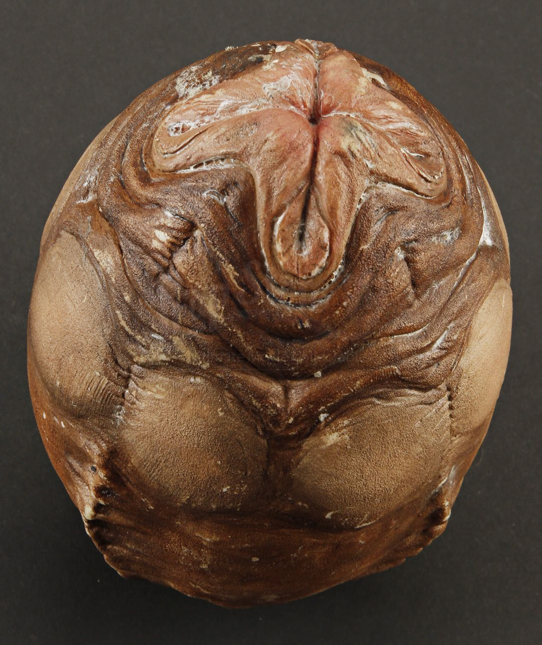 Xenomorph Egg Miniature Xenomorph Eg...