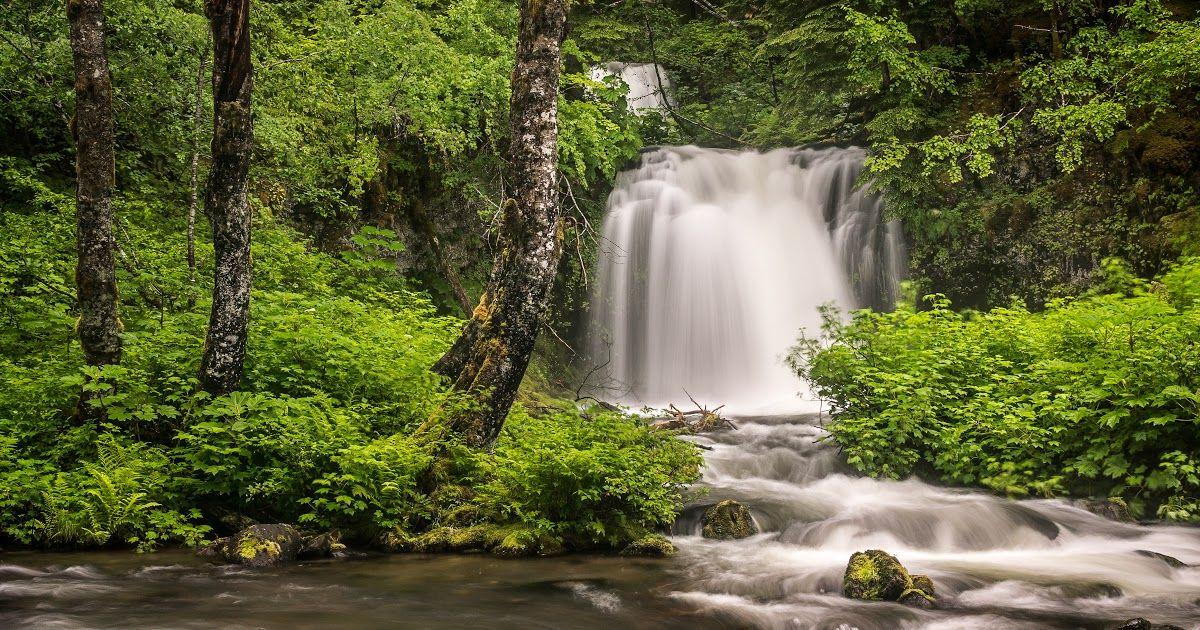 27 Download Gambar Pemandangan Indah Bergerak Gambar Pemandangan Pohon Alam Air Terjun Sungai Kecil Download Waterf Di 2020 Pemandangan Latar Belakang Air Terjun