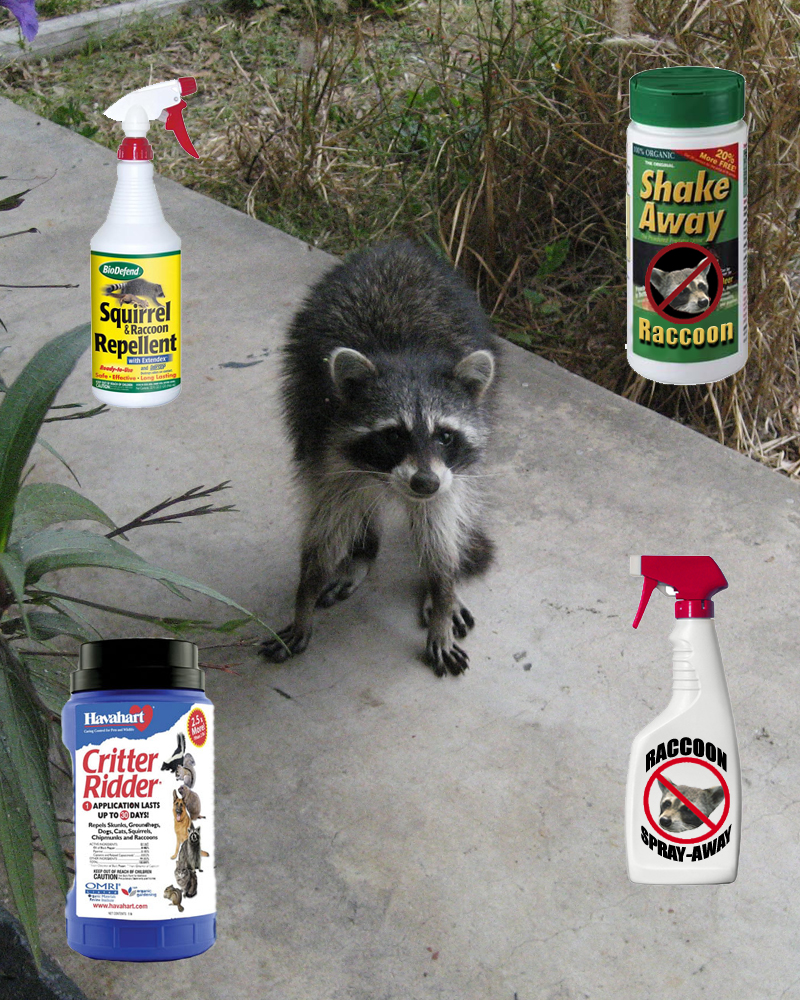947fa3be5b268fc99b5c206bebd34cfe - How To Get Rid Of Raccoons Pooping On Your Deck