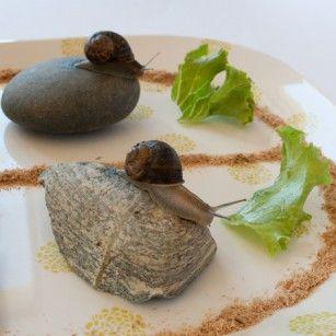 Course d'escargots