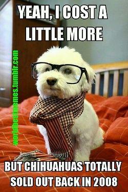 #HipsterDog