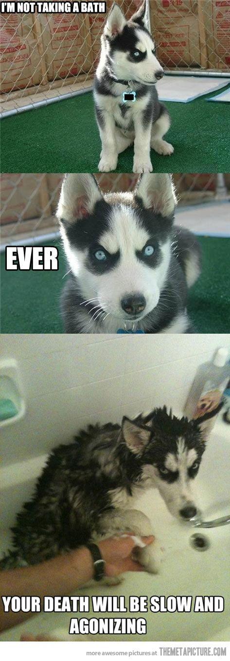 Funny Dog Angry Husky Bathtub Bath Cute Funny Animals Funny
