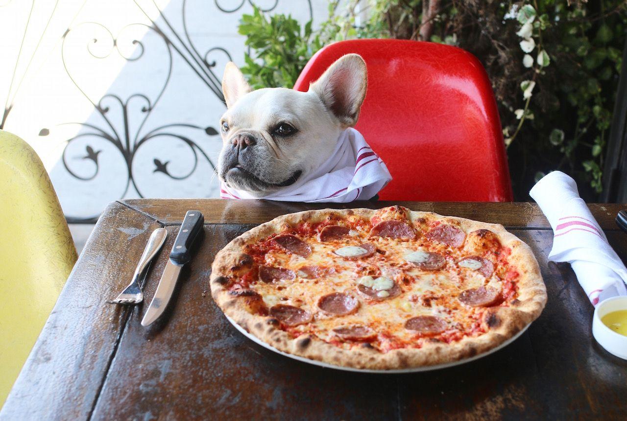 Прикольный картинка пицца, днем