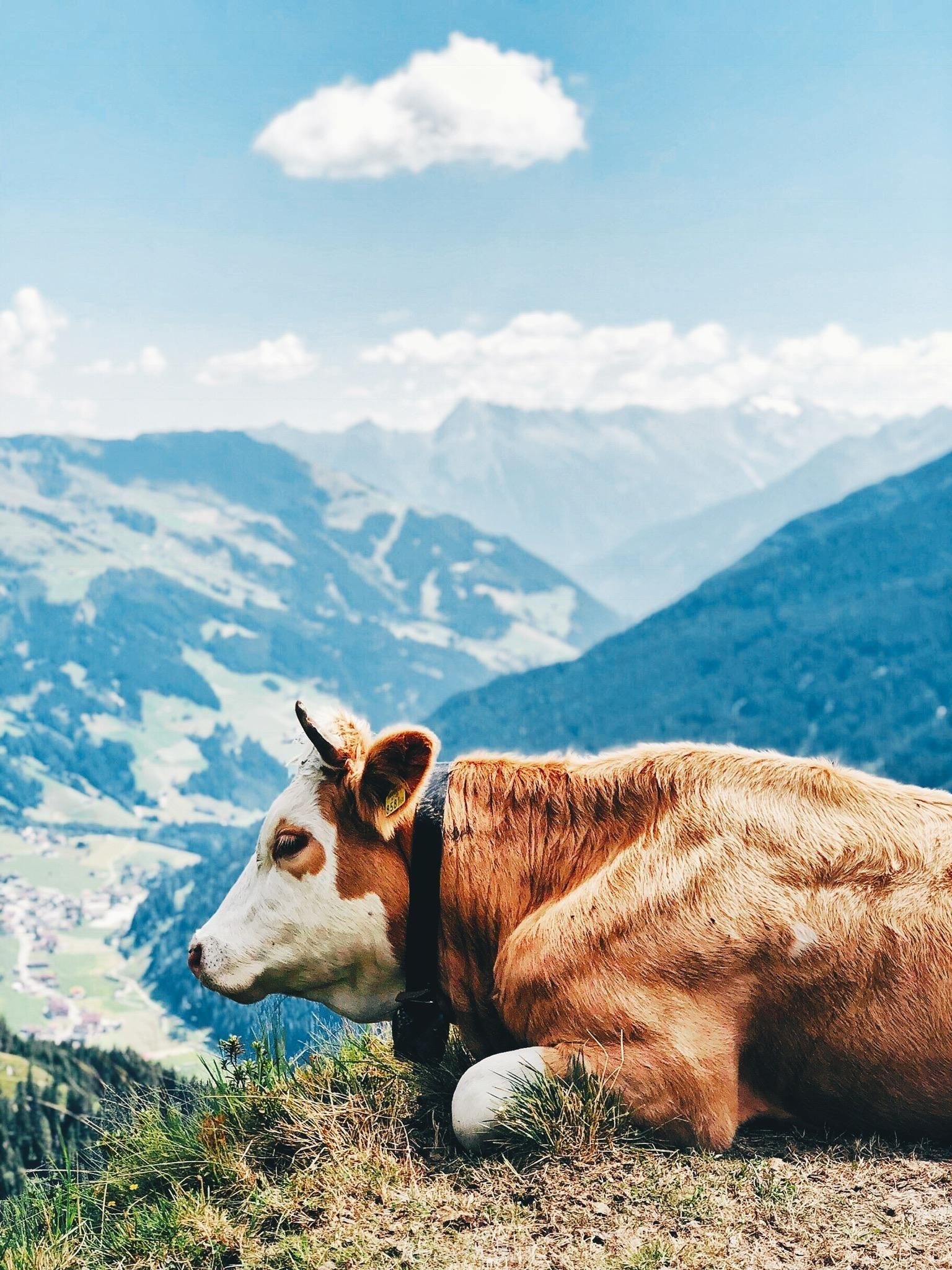 Austrian Alps (Zillertal) [1827 x 2436] [OC] Music