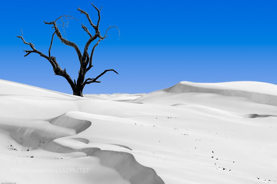 Tree in the Sand by Whatsteviesees