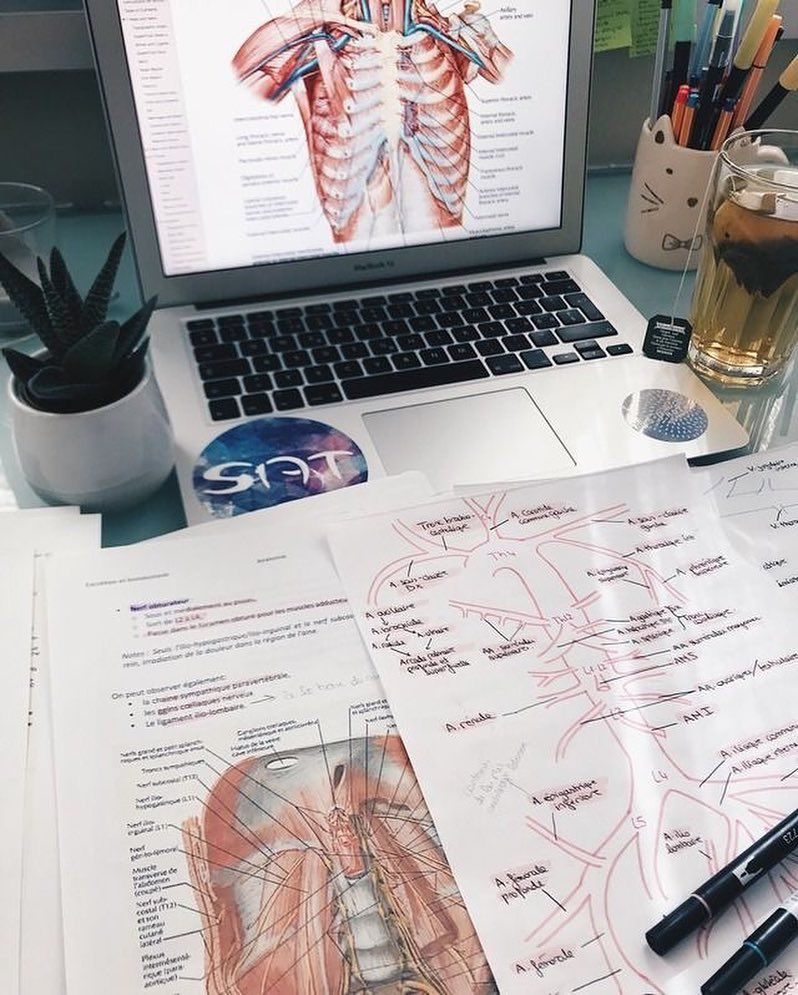 """Anatomy & Cappuccini ��️️ on Instagram: """"Medical students! What are your favorite topics?? Mine is neuroscience � . . . . . . #school #class #studygram #medschool #medstudent…"""""""