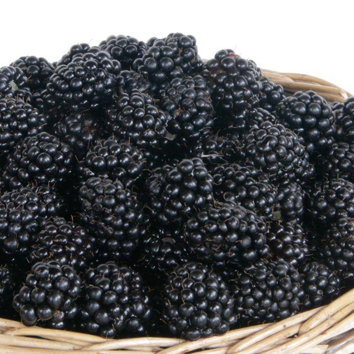 Blackberry Helen Fruit Gardening Suttons Seeds and