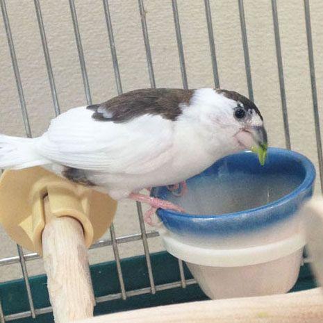 十姉妹に癒されて 動物 動物 かわいい 鳥