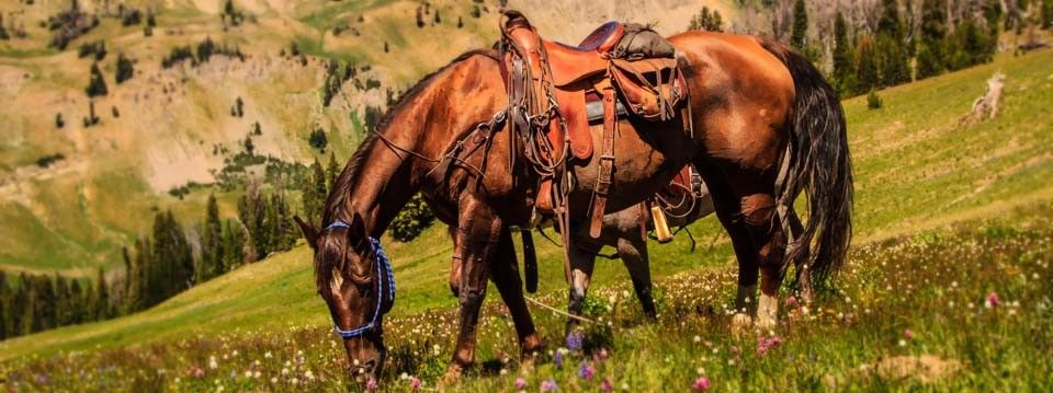 horse packing trips pictures - Google Search