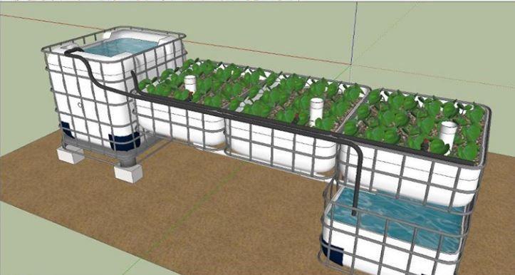 IBC Aquaponics | Aquaponics system, Backyard aquaponics ...