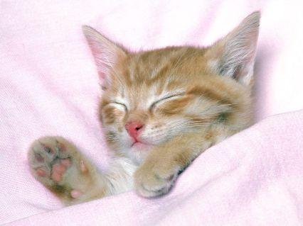 Kitty Tucked In For The Night Funny Animals Cat Sleep Pets Kitten Kitty Cute Animals Good Night Sleeping Kitten Cute Cat Wallpaper Cute Cats