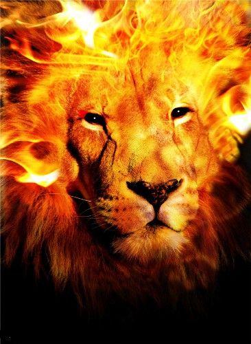 The Goyishe King   Lion of judah, Fire art, Fire lion