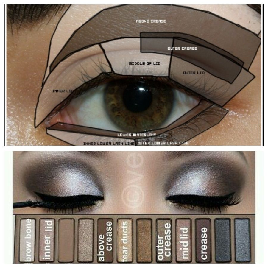nice naked palette look and shows you where each color goes on which part of your eye fashion. Black Bedroom Furniture Sets. Home Design Ideas
