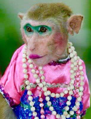 Monkey wearing makeup! | Monkeys funny, Funny monkey pictures, Monkey pictures