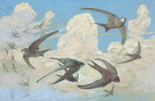 """onereedyear: """" Léo-Paul Robert - Le Martinet noir, planche d'oiseaux no 35, aquarelle """""""