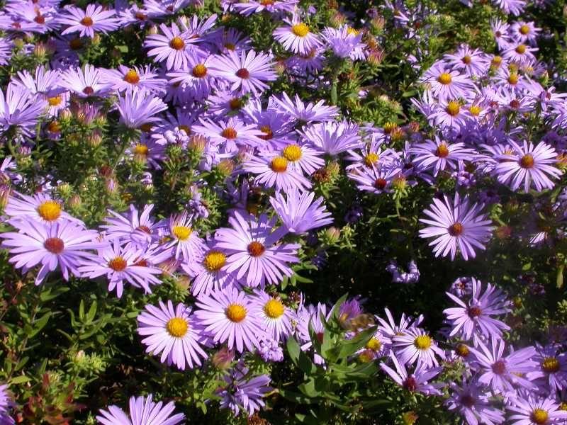 Perennials For Season Long Bloom Partial Shade Perennials Flowers Perennials Shade Perennials