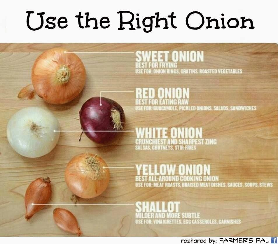 Yes, It Matters What Kind Of Onion You Use is part of Cooking onions, Cooking tips, Food, Cooking kitchen, Cooking, Food hacks - Here's a guide to what to use when