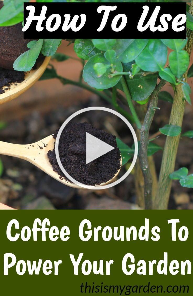 How To Power Your Garden Flowerbeds and Perennials With Coffee Grounds