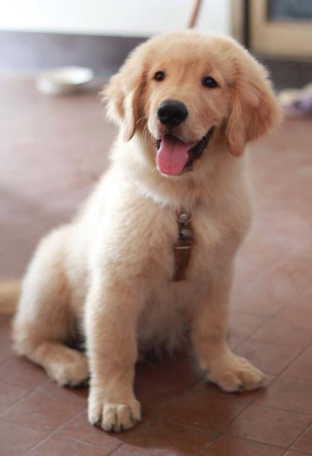 Did I Hear Walk Perros Pinterest Dog Animal And Doggies