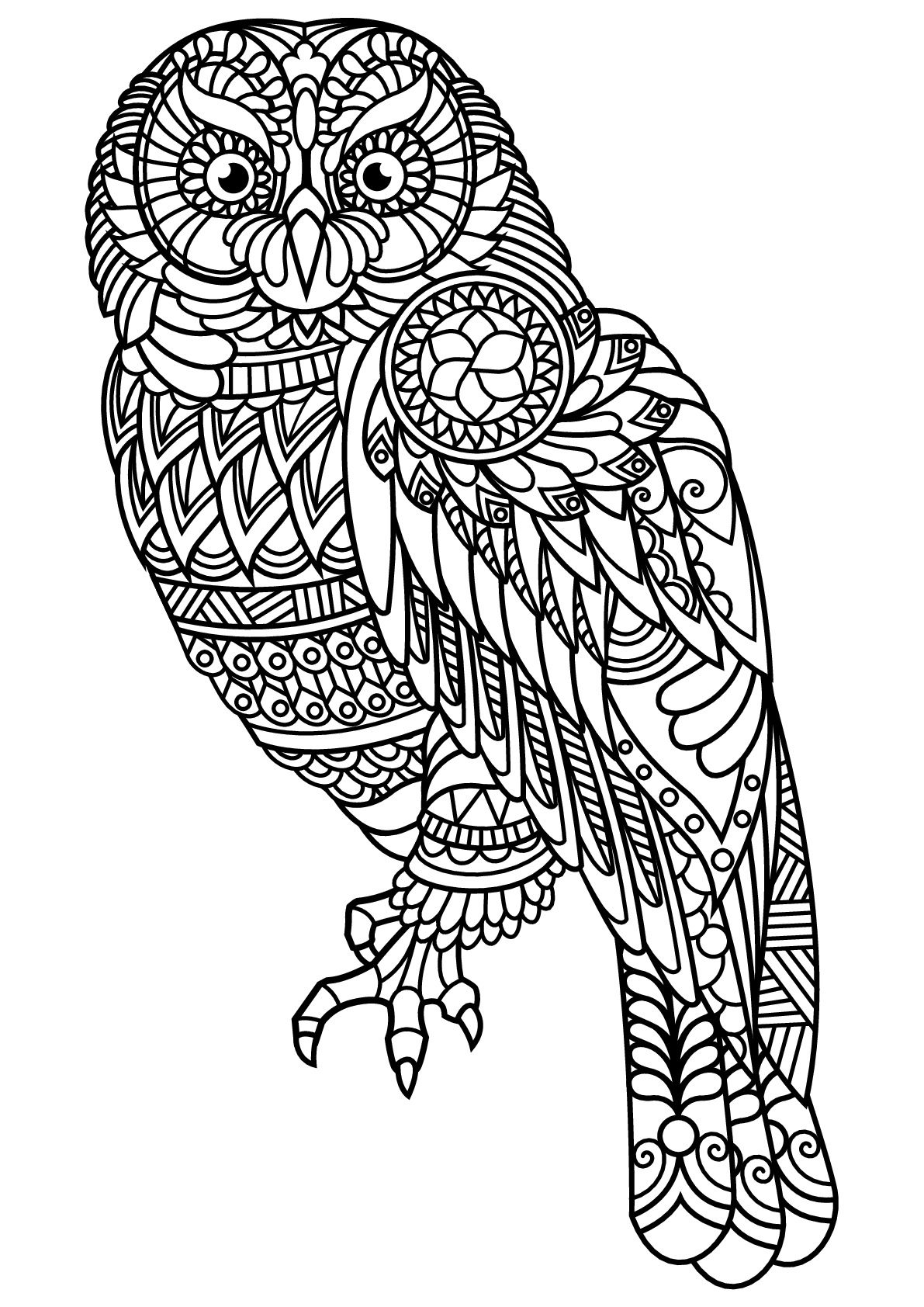 Owl, with complex and beautiful patterns, From the gallery