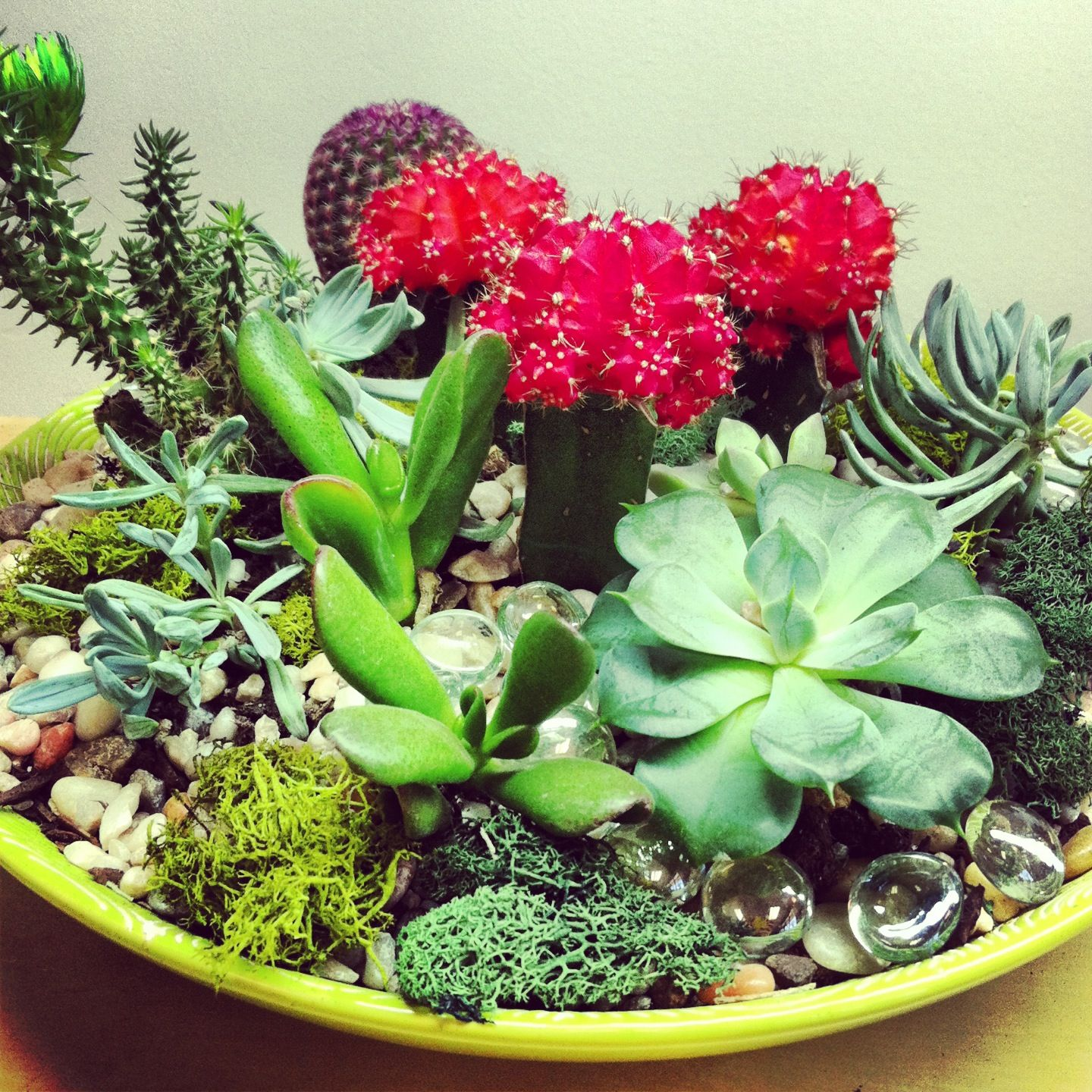 succulent and cacti dish garden in house garden design