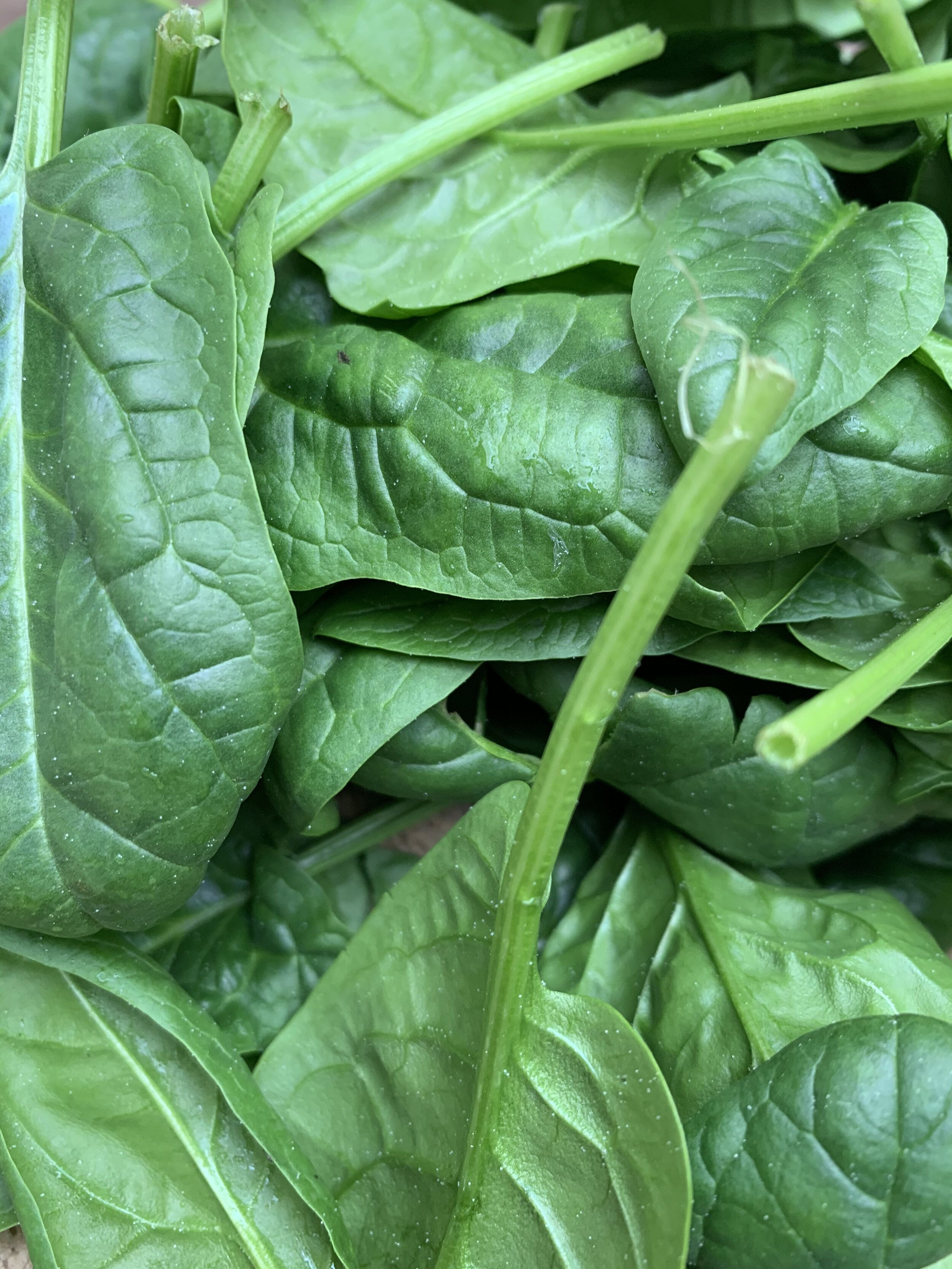 Baby spinach bag 200g7oz hoole food market chester veg