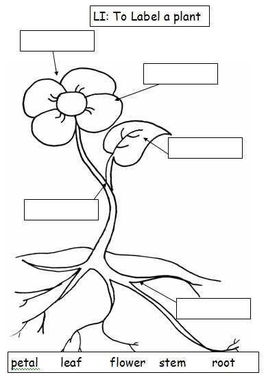 Image Result For Parts Of The Plants Worksheets Hjj Pinterest