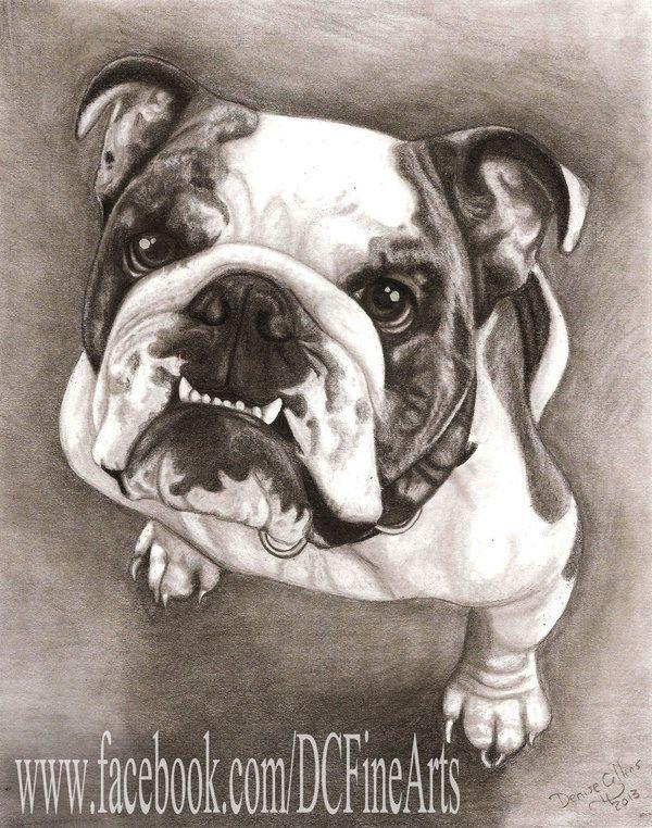 Bulldog 2 Bulldog Drawing Dog Print Art Bulldog Art
