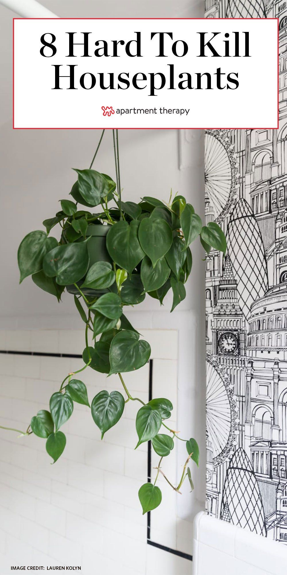 8 Houseplants So Low Maintenance They Re Basically Fake In 2020 Philodendron Plant Plants Houseplants