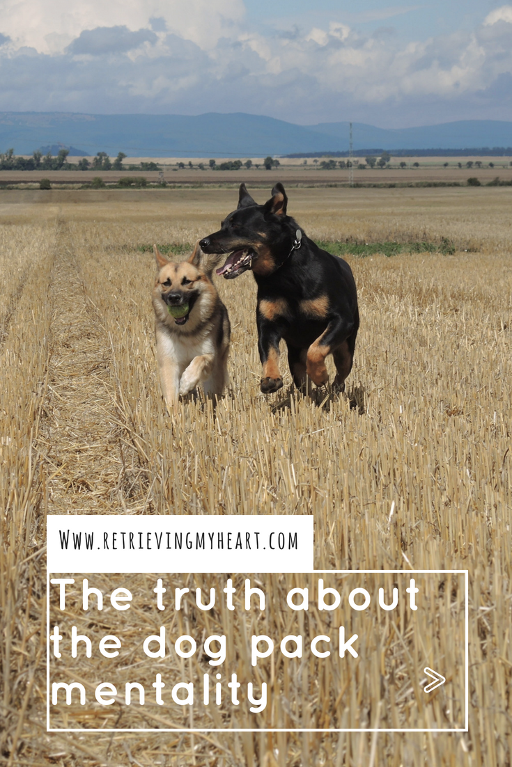 The Truth About Dog Pack Mentality Dogs, Animals, Dog