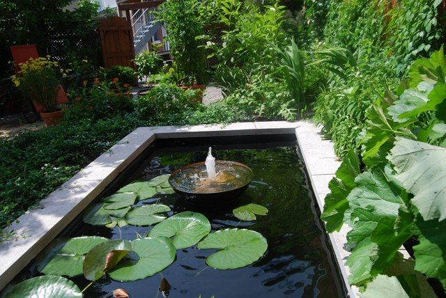 Bassin d 39 eau dans le jardin 85 id es pour s 39 inspirer n nuphar idee amenagement terrasse et - Amenagement bassin aquatique amiens ...