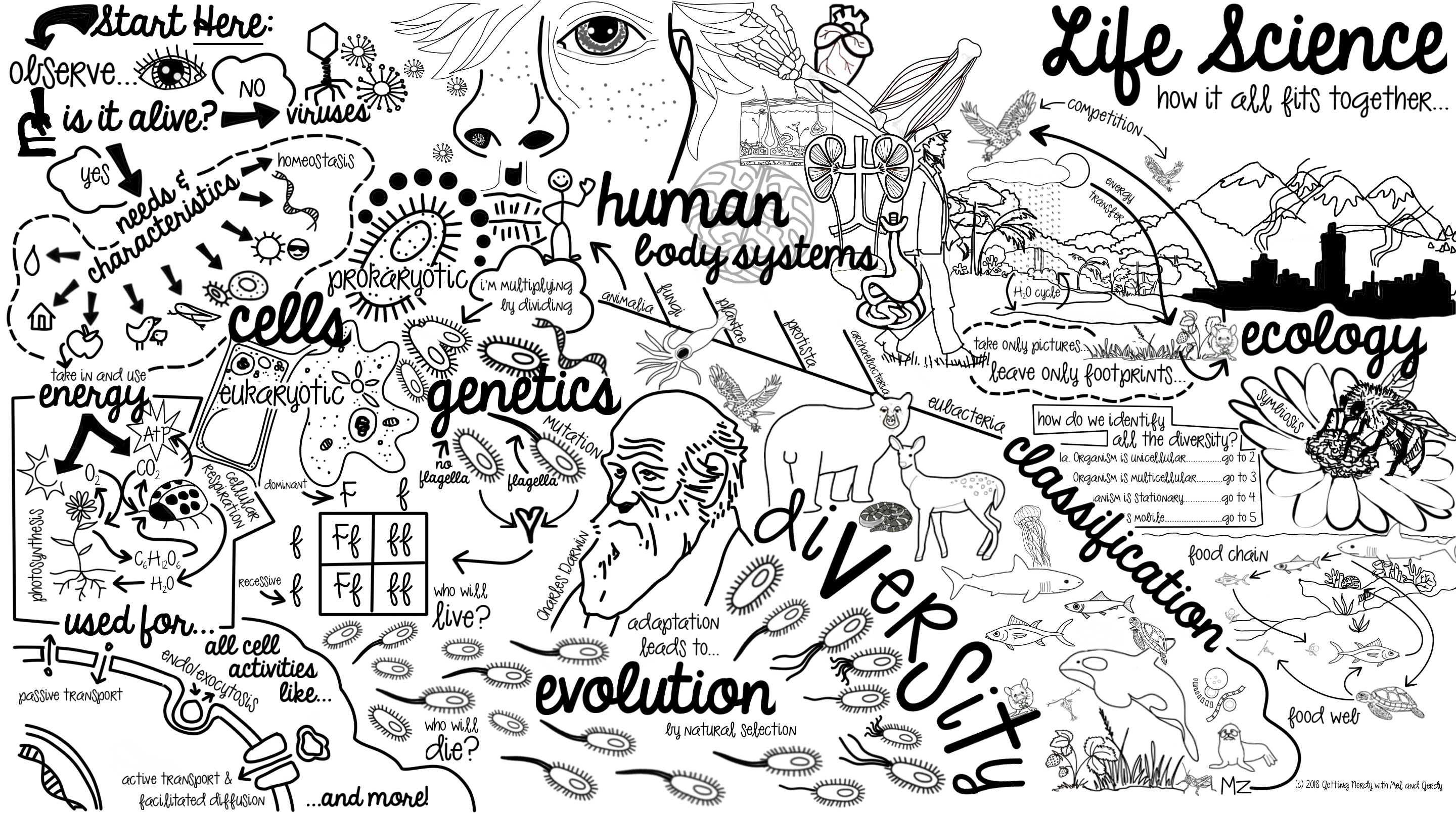 Free Curriculum Doodle Map For Biology And Life Science