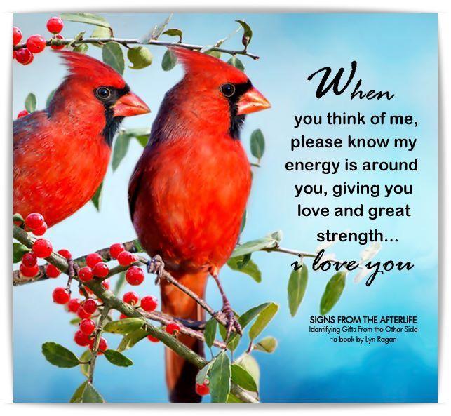 Pin by Marline Willis on Birdland: Ricky Reds | Cardinal