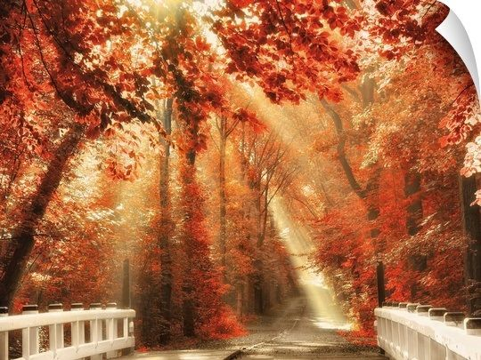 Red For Rest In 2021 Beautiful Nature Autumn Beauty Nature Photography