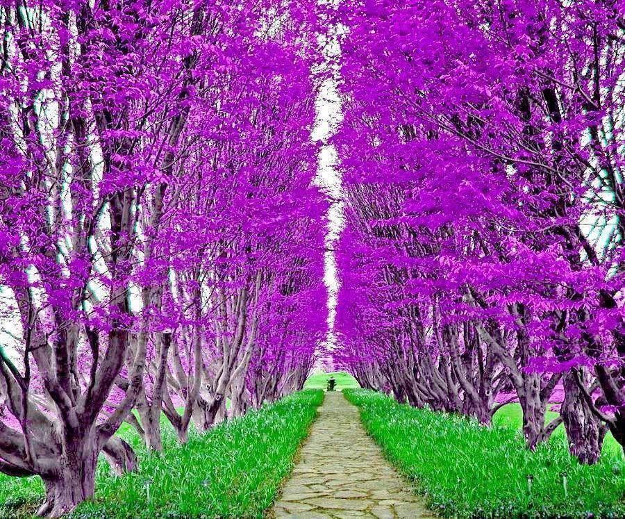 Resultado De Imagen Para Arboles De Hojas Moradas Jardines Bonitos Hermosa Naturaleza Arcos De Jardín
